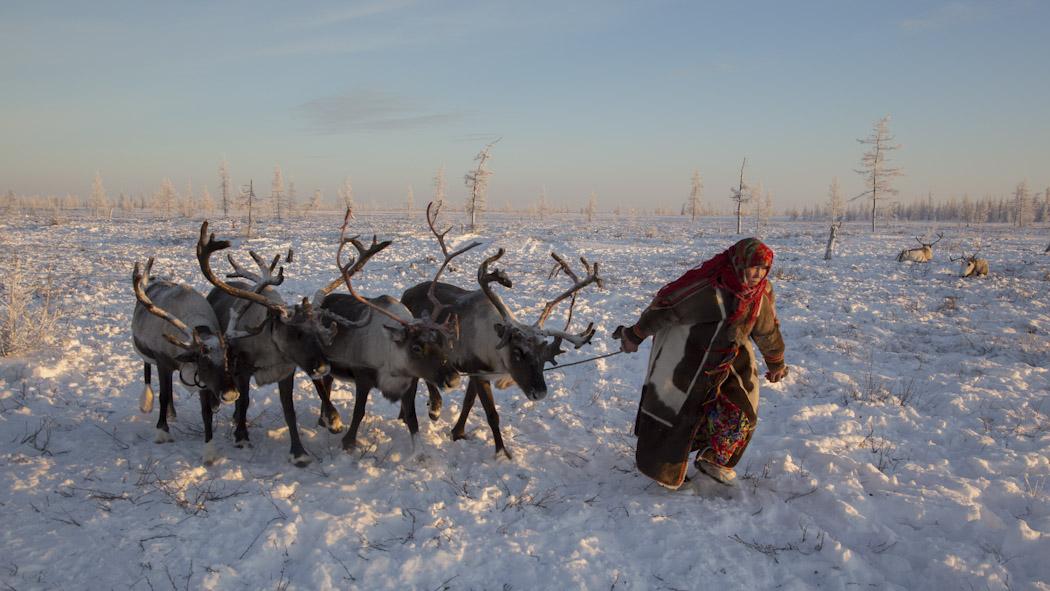 Nenets Siberia