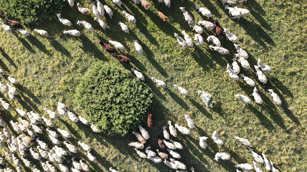 Kyrgyzstan-drone-cattle_0704