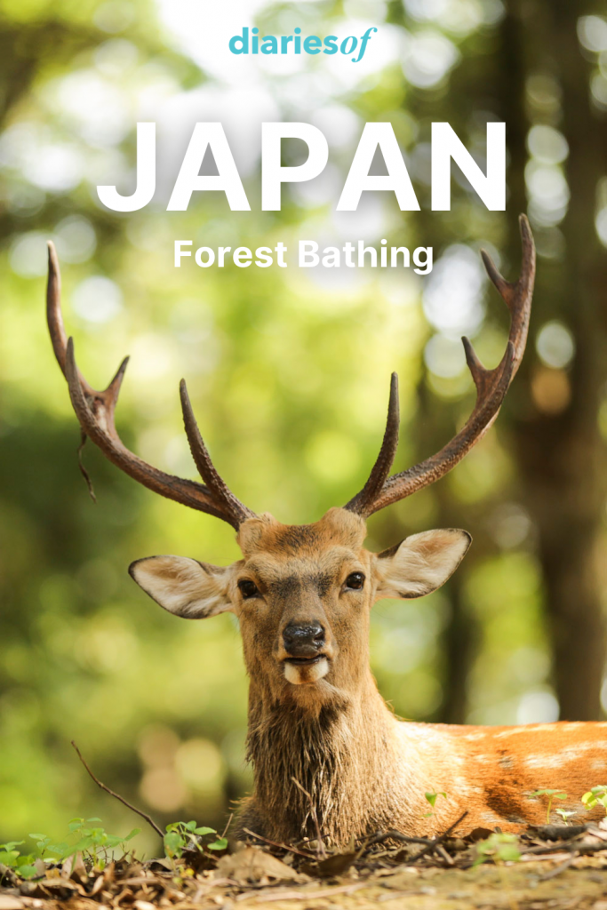 Diariesof-Japan-ForestBathing