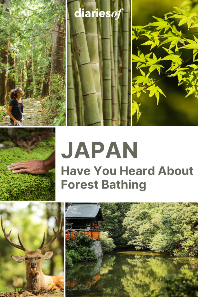 Japan-Have-You-Heard-About-Forest-Bathing