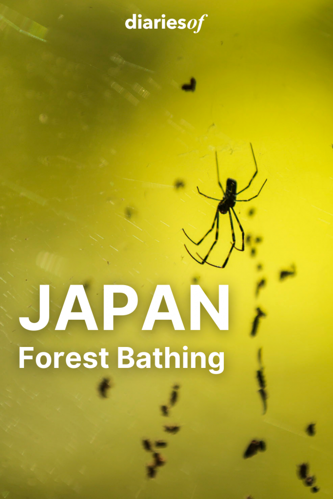 Diariesof-Japan-ForestBathing-Ants