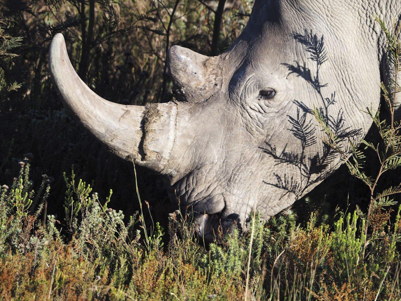 WEB_Rhino-2