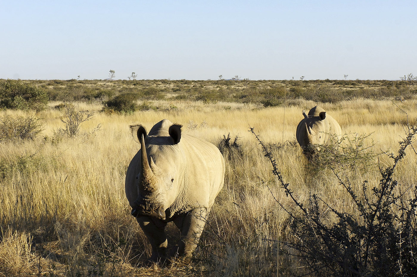 WEB_Rhino-5