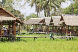manamae garden restaurant_AN3A4089
