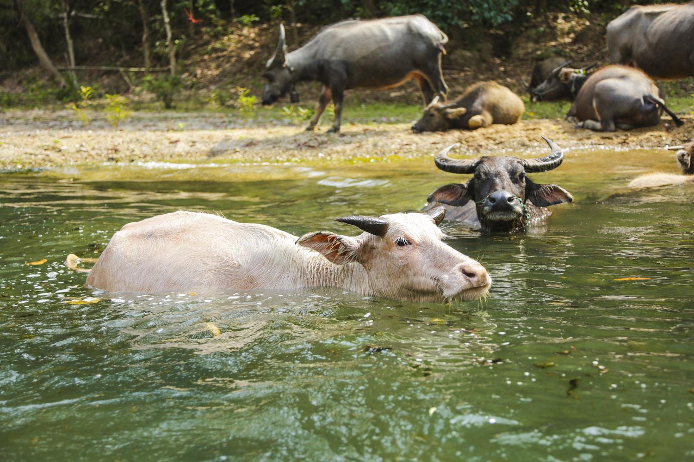 Konglor Laos_AN3A2366
