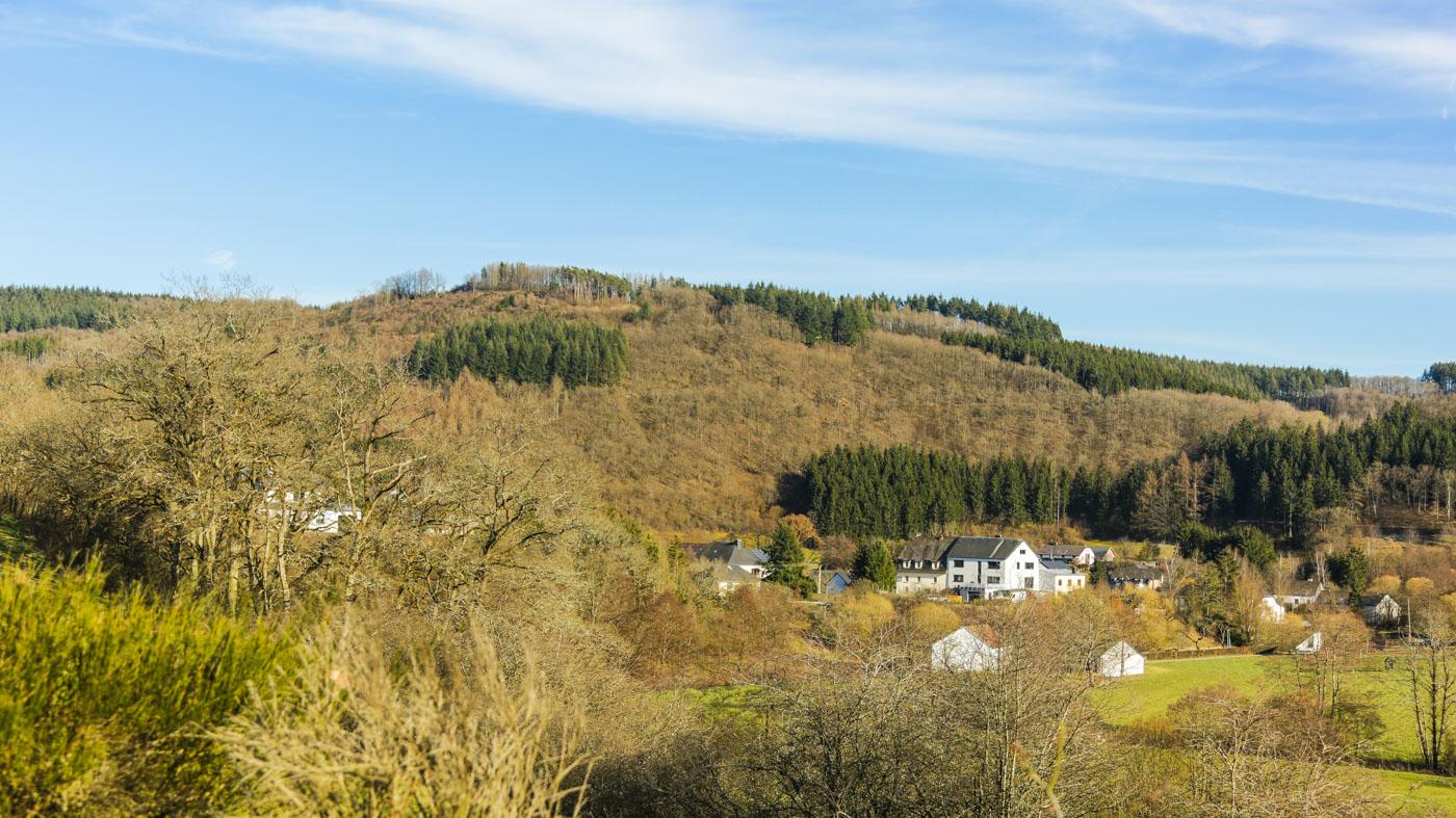 diariesof-daffodils-forest-lellingen-luxembourg-9725