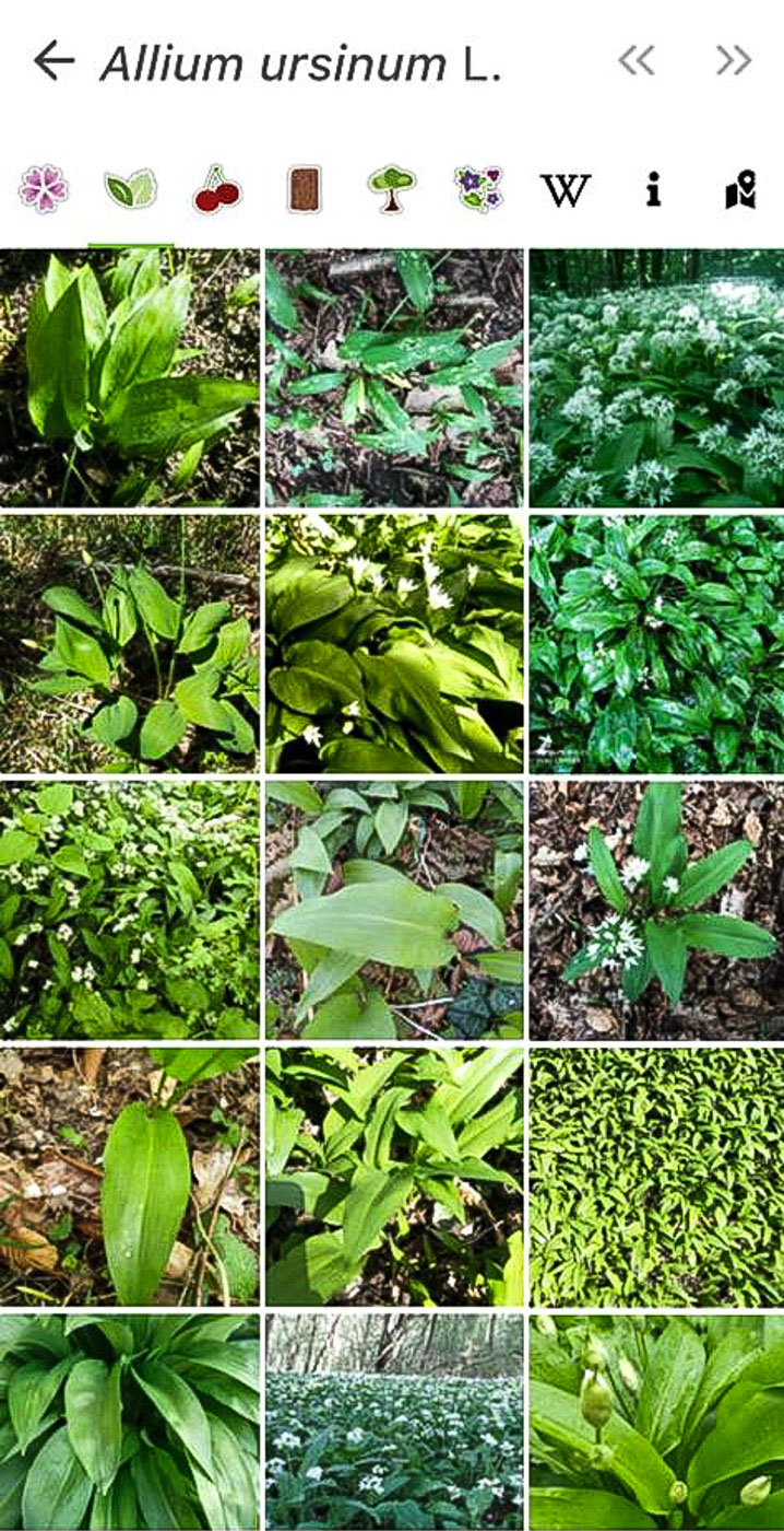 The PlantNet application helps to locate different plants on different locations