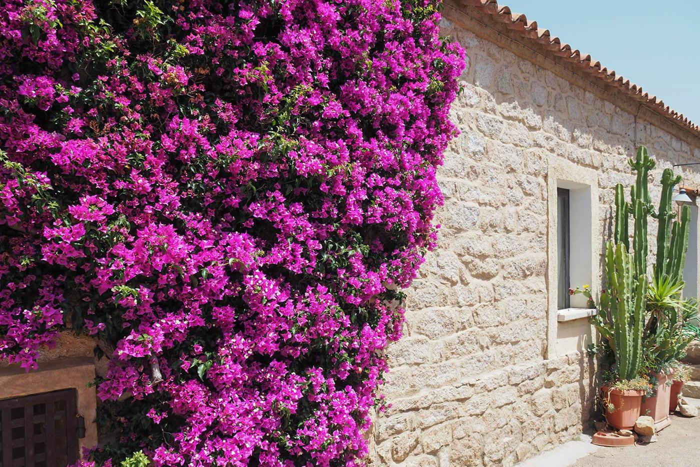 web-Granite-house-in-San-Pantaleo